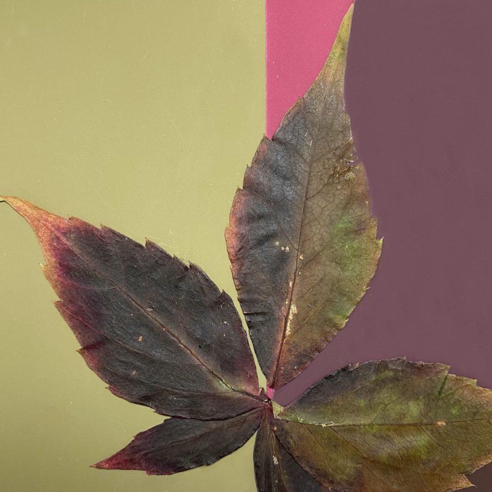 leaf; color; pattern; color aid