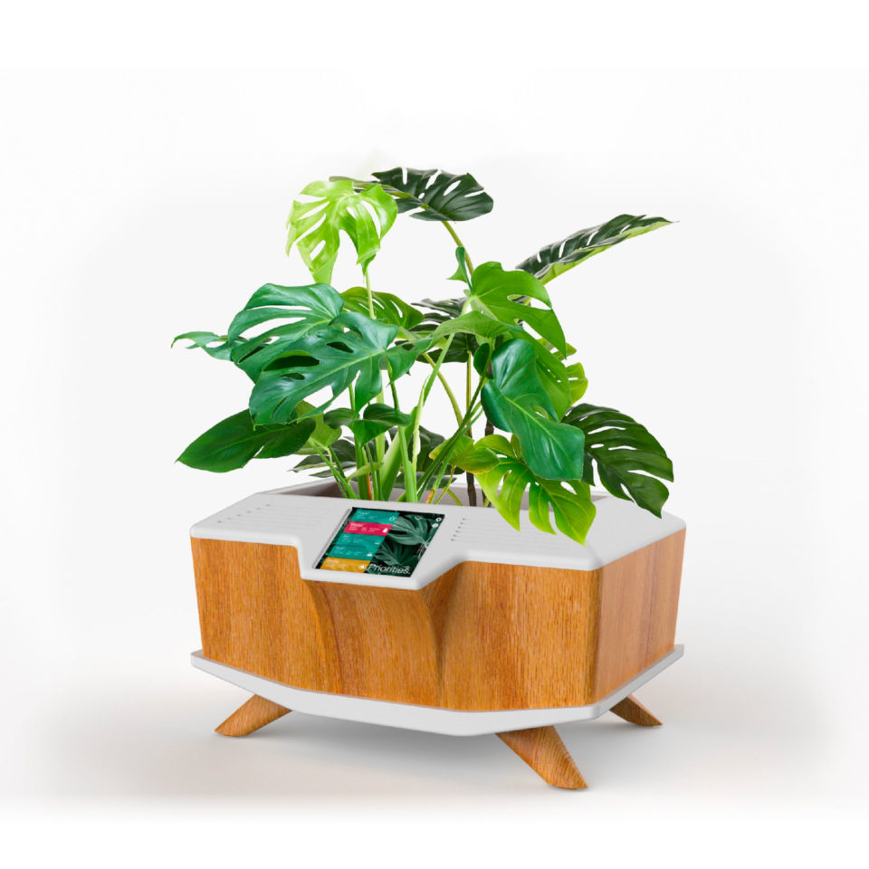 Wood and white planter with plant, digital image, product design