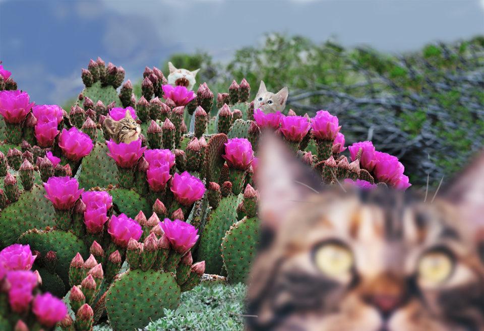 Digital manipulation of photographs of cactus