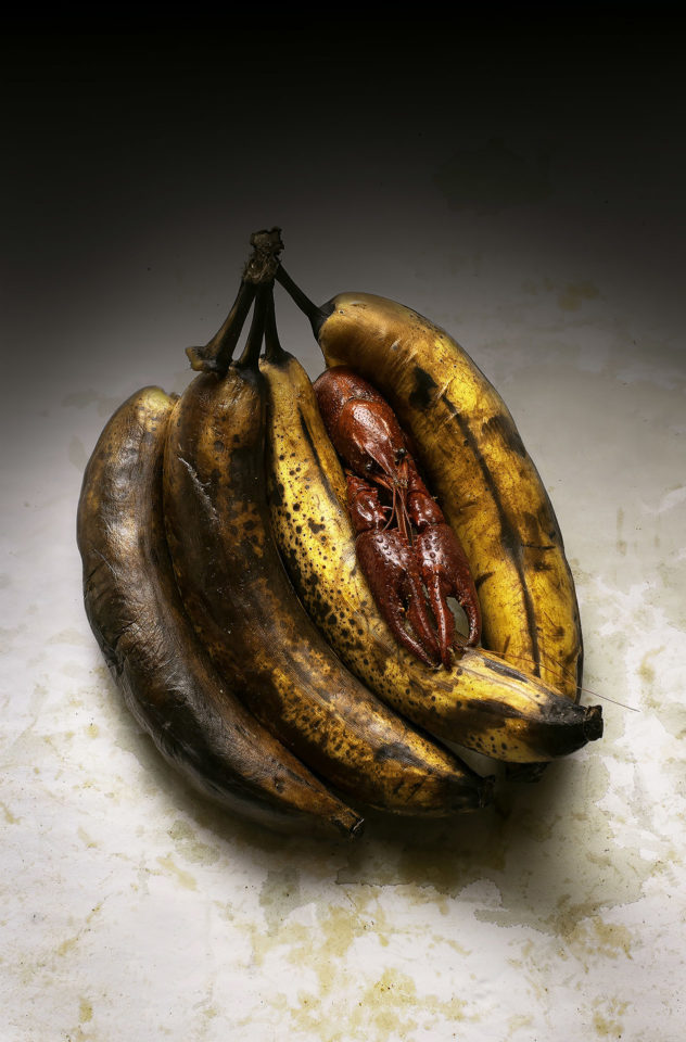 Photograph of a crayfish in rotten bananas.